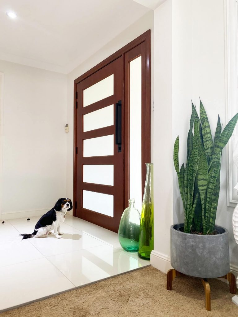 Frosted glass front door with side panel dog sitting on inside staring at door